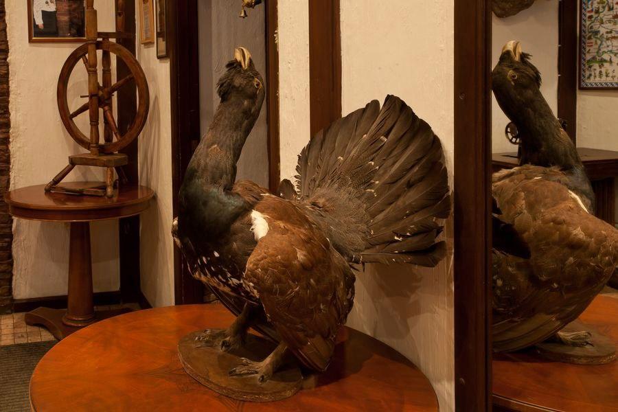Лиса и фазан